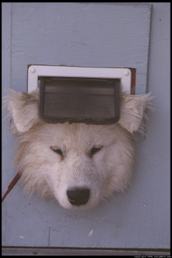 alex-in-cat-door.jpg